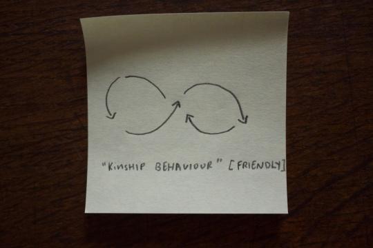 kinship behaviour